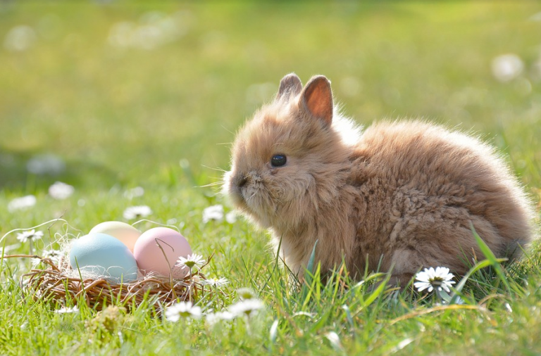 Why Are Bunnies Associated With Easter?