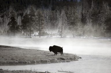 Lonely bison --- Image by © Ocean/Corbis